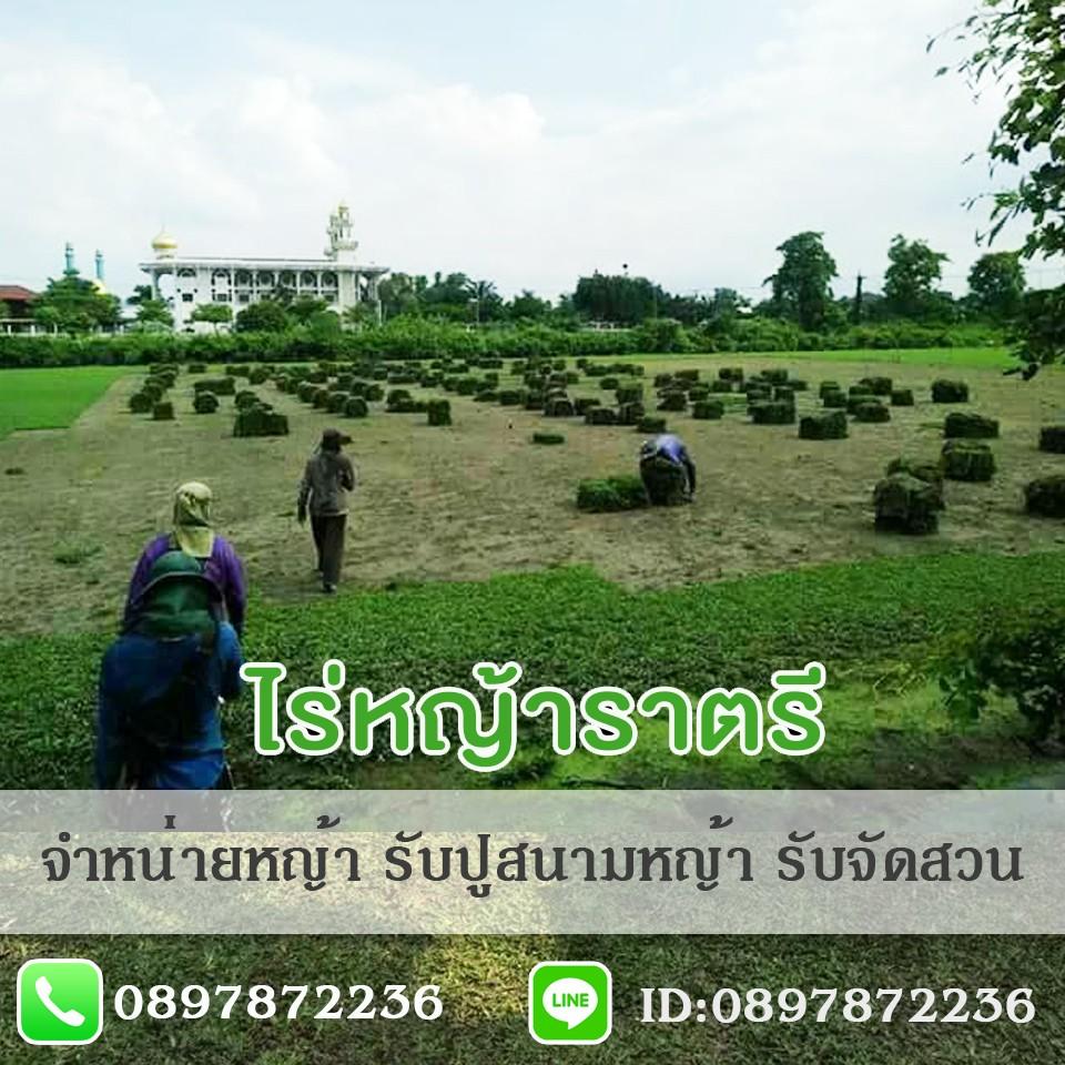 ขายหญ้าทุกชนิด จัดส่งหญ้า หญ้านวลน้อย หญ้าญี่ปุ่น หญ้ามาเลเซีย หญ้าพาสพาลั่ม หญ้าเบอมิวด้า | ไร่หญ้าราตรี.com